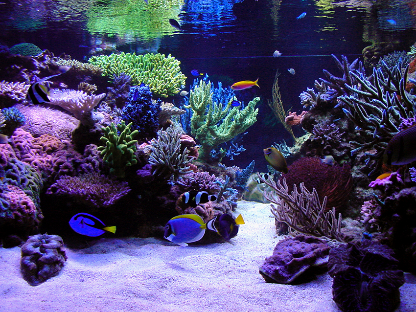 Best tanks from around the world page 8 reef central for Coolest saltwater aquarium fish