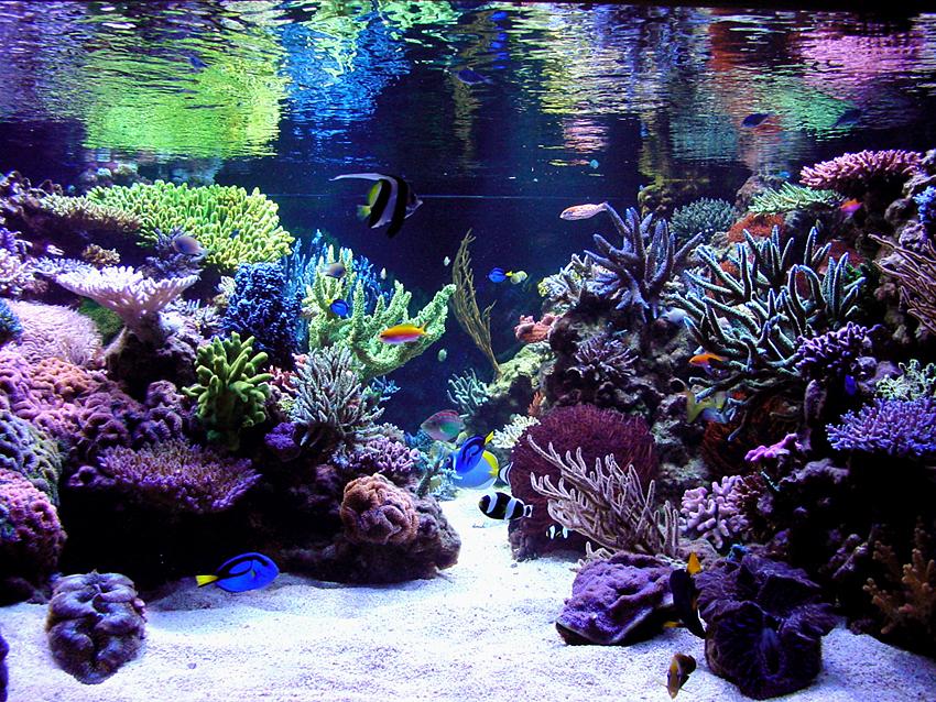 for Aquarium recifal nano