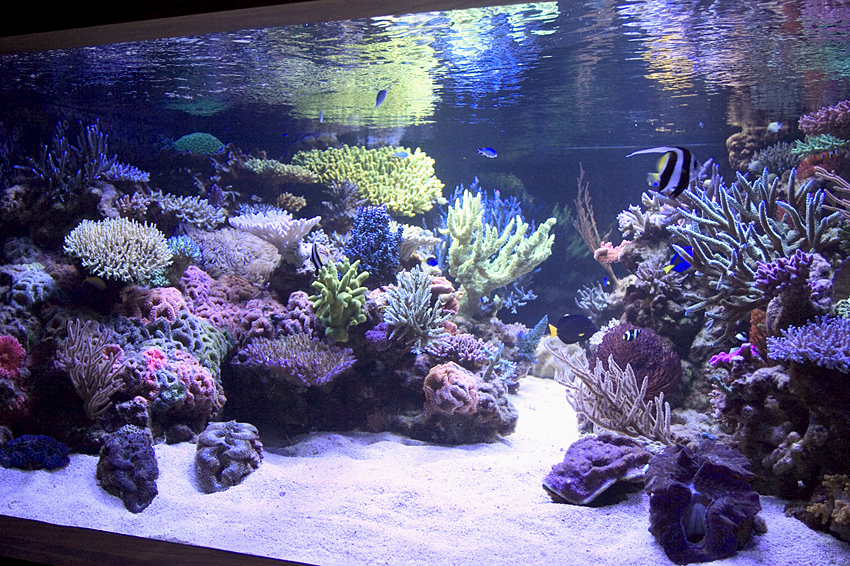aquascaping ideas freshwater easy aquascaping ideas aquascape aquarium ...