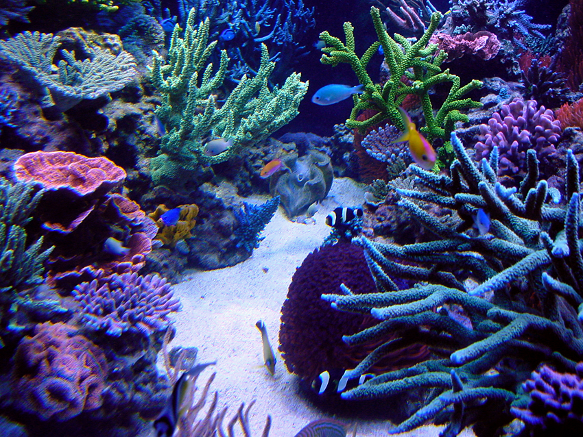 Best sps tanks in the world 3reef aquarium forums for Best fish for reef tank